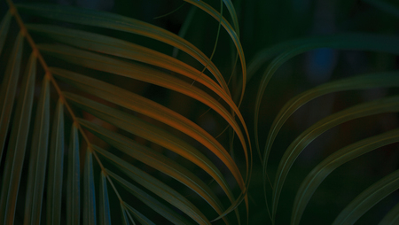Tropical Palm leaf background. Reklamní fotografie