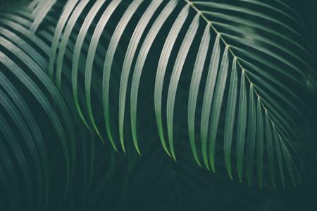 Palm leaf background. Reklamní fotografie - 98531108
