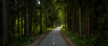 Beautiful pine forest road in Alps Reklamní fotografie - 103243001