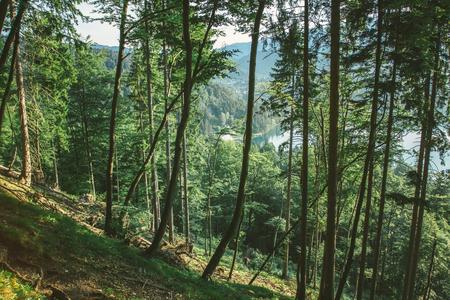 Forest near Bled lake Slovenia