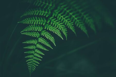 Fresh fern macro image. Horizontal orientation. Washed colors.