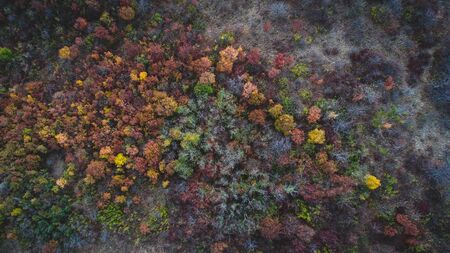 Top view of forest in autumn.