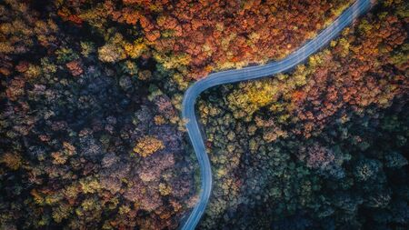 Overhead Aerial Shoot of road through colorful  forest.Shoot From air.