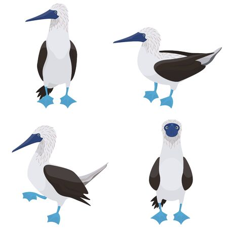 Blue-footed booby in different poses. Tropical bird in cartoon style.