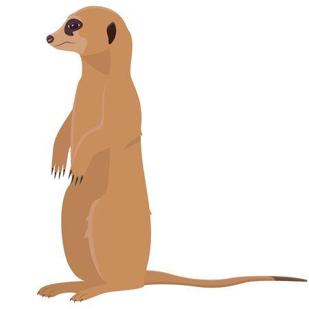 Sitting cute meerkat. African animal in cartoon style.