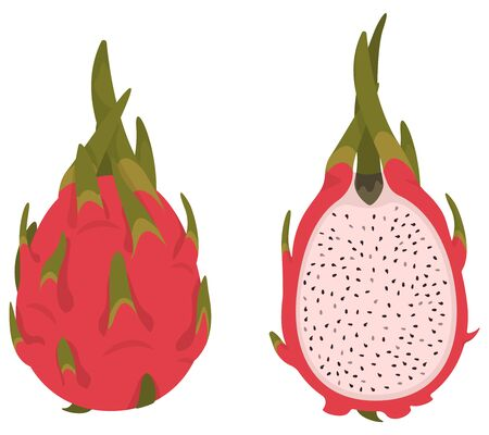 Whole and half pitaya. Dragon fruit in cartoon style.