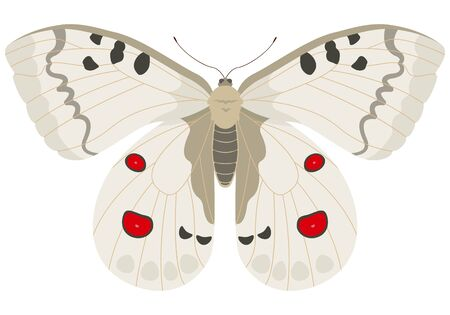 Parnassius apollo butterfly. Beautiful insect in cartoon style.