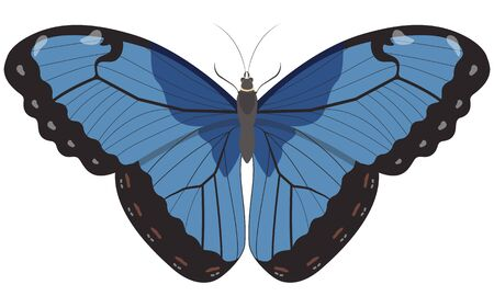 Blue Morpho butterfly. Beautiful insect in cartoon style.