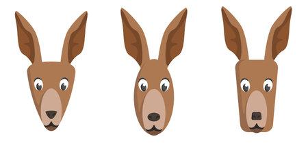 Set of cartoon kangaroos. Different shapes of animal faces.