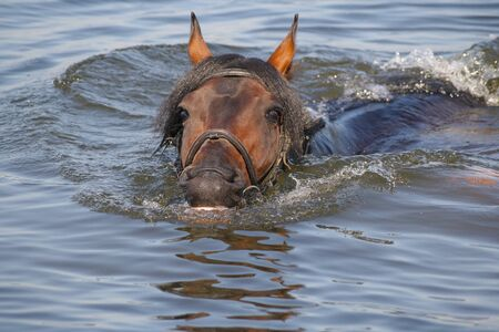 floats: horse in water Stock Photo