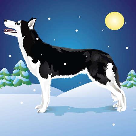 �siberian husky�: Dog breed Siberian Husky in winter forest Illustration