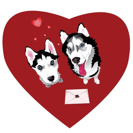 �siberian husky�: Two dogs of breed Siberian Husky and a letter valentine