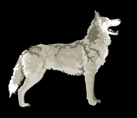 wolf in black background Vector