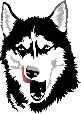 huskies: husky licked