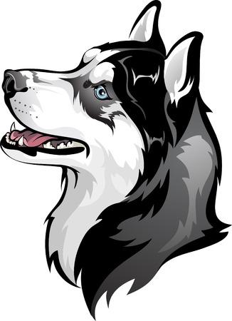 dog: 시베리안 허스키 일러스트