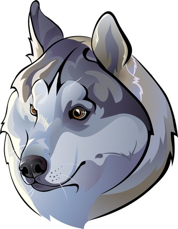 huskies: Siberian Huskies Illustration