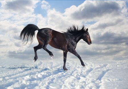rejoices: Russian trotter rejoices snow