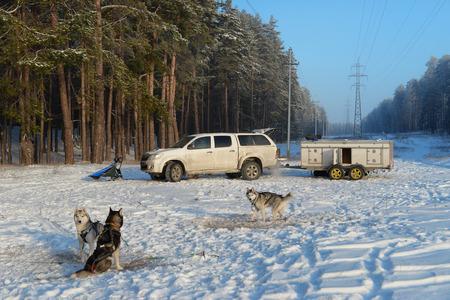 arrived: Husky team arrived for training Stock Photo