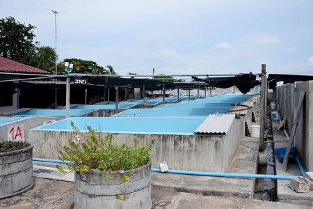 rabbitfish: The Shrimp concrete farming. A fish hatchery  in Thailand. breeding aquatic animals.