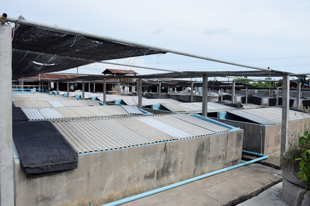macrobrachium: The Shrimp concrete farming. A fish hatchery  in Thailand. breeding aquatic animals.