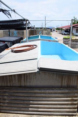 rosenbergii: Aquatic animals. Shrimp concrete farming. A fish hatchery in Thailand. Stock Photo