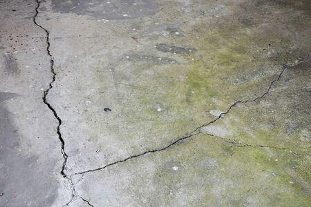lichen: Texturebackground of old lichen concrete.
