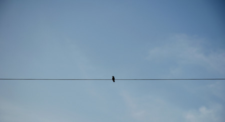 simply: Bird on electric pole against clear sky background. simply composition.