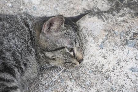 grey tabby: Portrait grey tabby cat sleep on concrete floor. Stock Photo