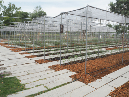 agricultural industry: Salad and vegetable garden. Agricultural industry.