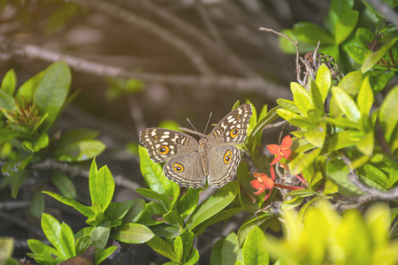 Close up orange butterfly on flower. Stock Photo