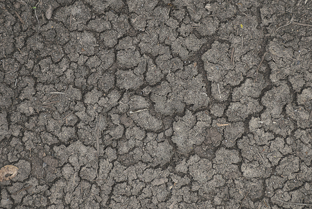 desolation: cracked or dried groundearth texture background. aridity, desolation and dryness concept.