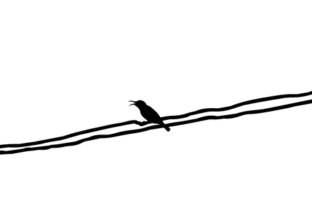 prin: Silhouette Mugimaki Flycatcher yellow bird on wire with isolated, white background. Foto de archivo
