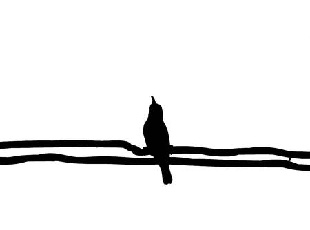 prin: Silueta mugimaki Cazamoscas pájaro amarillo en el alambre con fondo blanco, blanco.