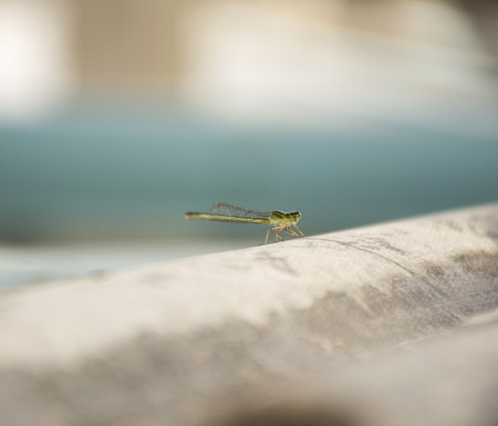 Green Snaketail dragonfly on floor. Stock Photo