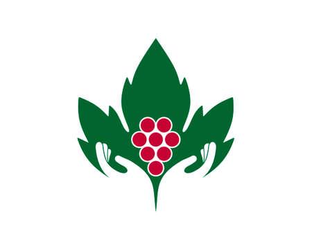 Wine leaf and grape care