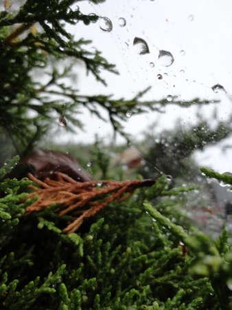 Druppels Water in Spinnen Web