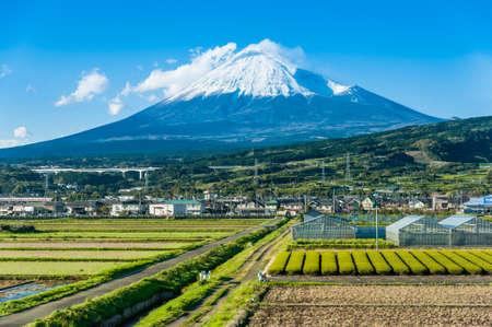 Rows of fresh green tea with Mt. Fuji