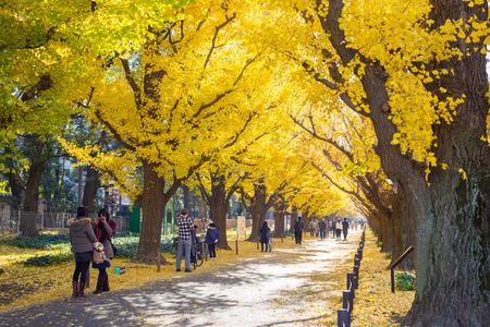 autumn path in Tokyo 報道画像