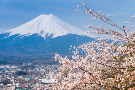 View of Cherry Blossom and Mt fuji