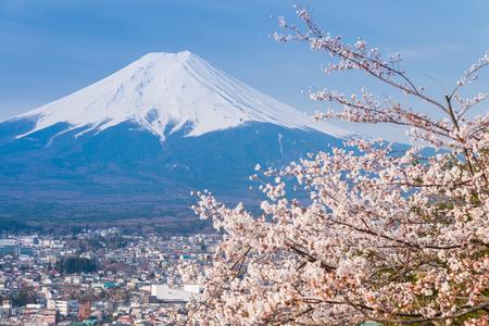 桜と富士山の眺め