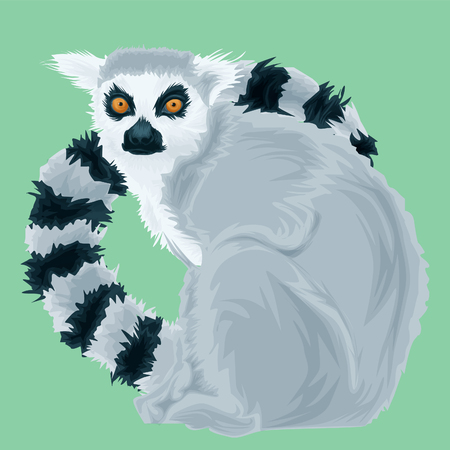 Vector Portrait of Lemur. Illustration of Madagascars lemur on green background detailed Illustration