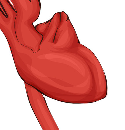 Medicine illustration, vector human heart in red color. Illustration