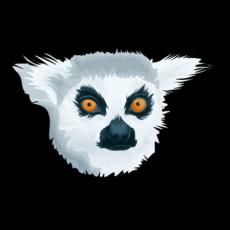 Vector Portrait of Lemur. Illustration of Madagascar lemur on green background detailed