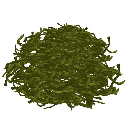 Laminaria, Asian food, Full color sketch vector illustration. Illusztráció