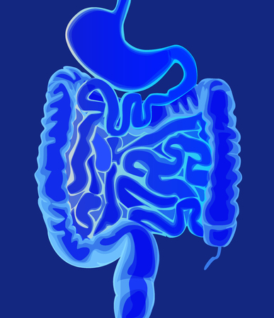 Abstract medical vector illustration healthy intestine in a light blue color