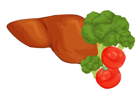 Concept of healthy liver. Cartoon illustration of foods that cleanse the liver. Vegetables and fruits in shape of human liver Ilustrace