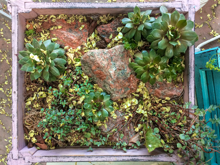 plants in a white wooden box, succulents, leaves