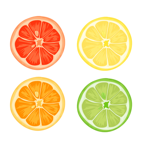 Citrus slices of lemon, orange, lime and grapefruit. Vector illustration on white