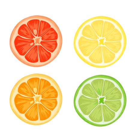 Citrus slices of lemon, orange, lime and grapefruit. Vector illustration on white