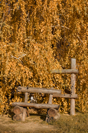 Autumn landscape with a wooden bench without anyone on the background of a bright orange tree in the sunset light